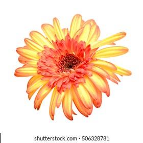 Artificial orange Gerbera on white background