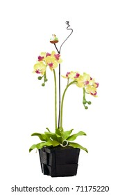 Artificial orchid on white background