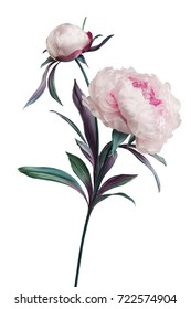 artificial peonies on white background