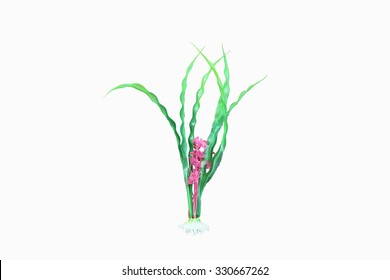 artificial pink flower marine plant on white background