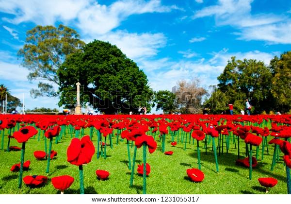 Artificial Poppies Kings Park Perth Australia Stock Photo (Edit Now