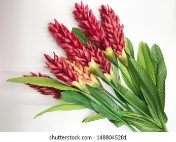 Artificial Red cone ginger flower on white background