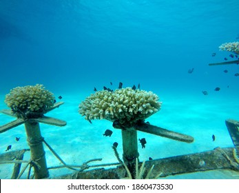 Artificial reefs in underwater areas that require a structure to enhance the habitat for reef organisms - Shutterstock ID 1860473530