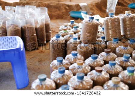 Artificial Substrate Bag Growing Edible Mushroom Stock Photo