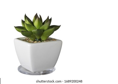 Artificial succulent plant or plastic plant. Artificial cactus plant in white ceramic flower pot isolated on white background.