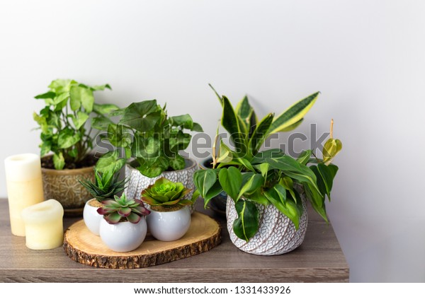 Artificial Succulents Exotic Plants Arrow Head Stock Photo Edit