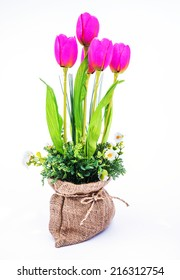 Artificial tulip flower with white background
