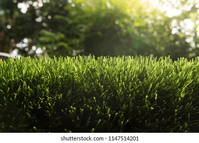 Artificial turf with sunshine