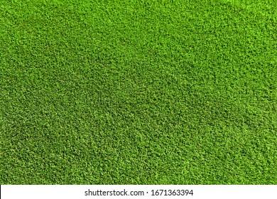 Artificial turf. Yellow-green short-cut plastic grass.