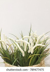 Artificial white Flower Grass on White Background