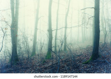 Artisctif phot of a misty forest with vintage glamour glow filter