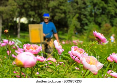 An artist with an easel in defocus on a plein air painting of blooming rose peonies in a spring botanical garden. Pearl placer blossoming peonies in a summer garden. Gentle pink yellow flowers. Floral