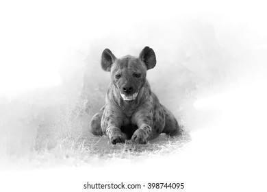 Artistic, black and white photo of  Spotted hyena, Crocuta crocuta from front view, lying on the ground  with mouth open, isolated on white background with a touch of environment. Kruger, SA.