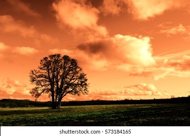 Artistic, false-color, post-modern impression of single oak standing in a field.  Dark dystopian effect intentionally created.