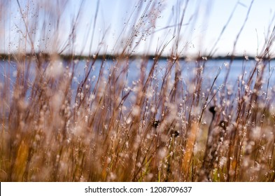 Artistic focus view of dead grasses, reeds and wildflowers against a blue sky. Lake Minnetonka in Minnesota in the background. Photo taken in Tonka Bay MN