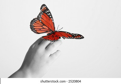 An artistic image of a butterfly on a child;s hand