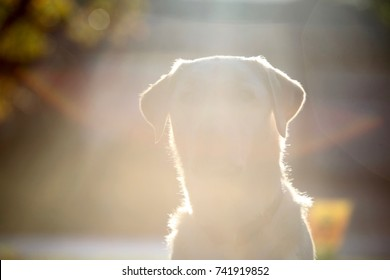 Artistic image of an outline of a dogs head with light all around it as a concept of a dog who has passed away or a background