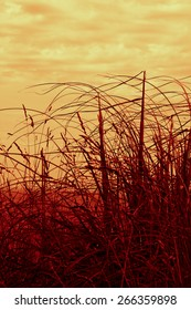 artistic interpretation of dune grass blowing in the wind with cloud formations behind