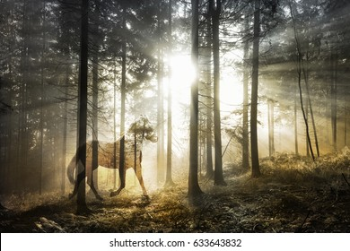 Artistic mystical horse in the fantasy sunny fairy forest landscape. Abstract unicorn in the magical woodland. Double exposure technique used.