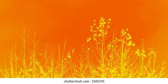 artistic orange floral design
