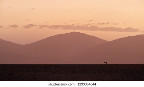 Artistic photo of Namib desert landscape with antelope Gemsbok, Oryx gazella  against high dunes of Namib Desert. Sunset in Namib desert.  Wildlife photography, Namib Desert, Namibia.