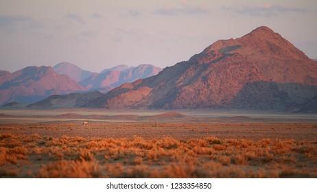 Artistic photo of Namib desert landscape with antelope Gemsbok, Oryx gazella  against rocky mountains of Namib Desert. Sunset in Namib-Naukluft desert.  Wildlife photography,   Namibia.