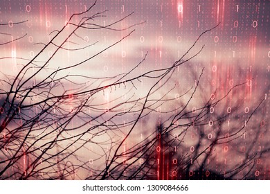 Artistic red sky with tree branch and computer binary numbers data background.