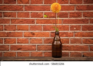Artistic still life of yellow flower with long green stem in rounded brown glass beer bottle on weathered wood board in front of textured red brick wall with white grout in flat afternoon light.