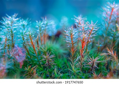 Artistic stylization of macro photography. Water droplets on moss stalks. A photo with a shallow depth of field. Selective focus on water droplets in the center of the frame. Soft focus.