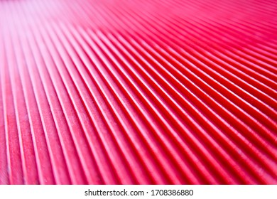 artistic-view-detail-red-hot-260nw-17083
