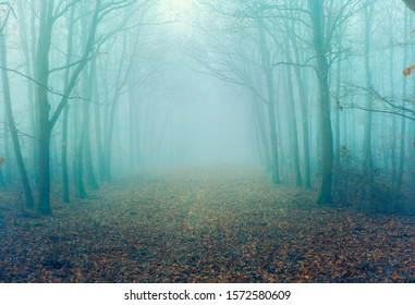 Artistic vintage style photo of a mystierious foggy forest alley with bare trees and fallen leaves
