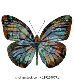 Artistry of beautiful flying butterfly on white background, exotic nature and art