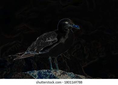 Artists perspective of  a painted California seagull standing on a reef during the daytime.