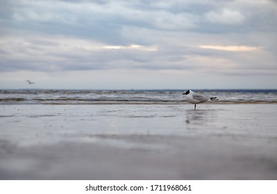 Art-photo. A lonely Seagull on the beach. Bottom view.