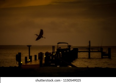 An artsy blurred great blue heron flying in the night sky over a fishing dock on the Chesapeake Bay in Virginia.