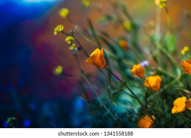 artsy photos of orange poppy flowers on a california mountains good for illustration and art