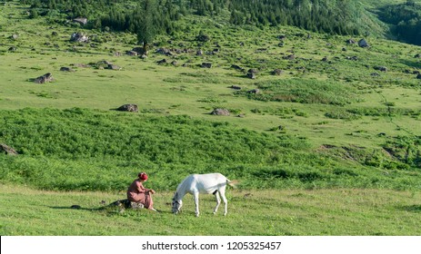 Artvin, Turkey - July 2018: An unidentified woman with her horse in Gorgit highland in Blacksea region, Artvin, Turkey