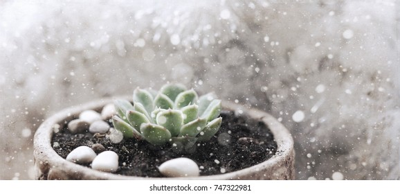 Artwork in retro style, Christmas decoration, succulent flower, snow