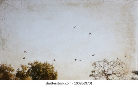 Artwork in vintage style, flying birds, sky, trees