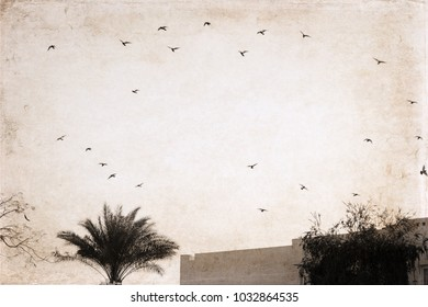 Artwork in vintage style, flying birds, palm tree