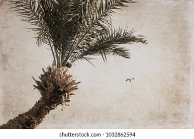 Artwork in vintage style, Palm and flying pigeon