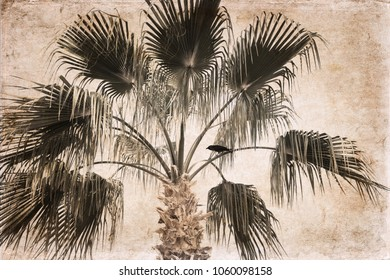 Artwork in vintage style, Palm, raven