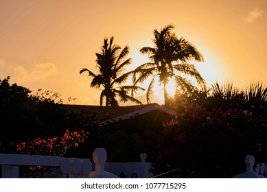 Aruba, Caribbean - January 15 2018: colorful and extraordinary sunset on the palm trees of the Eagle Beach of Aruba Caribbean island during the warm winter tropic...