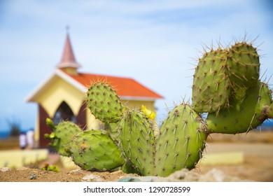 Aruba Desert cactus with Alto Vista chapel in the background