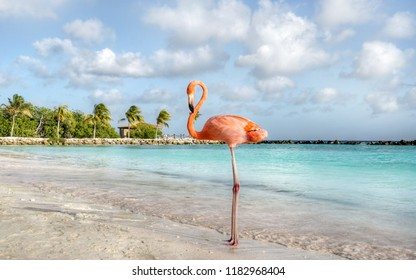 Aruba, flamingo beach