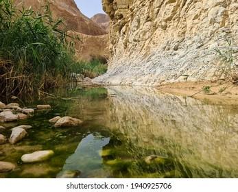 Arugot stream in Ein Gedi national park near the Dead sea, Israel