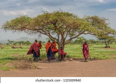 Arush, Tnazania/Jan 24, 2019: Maasai men resting in the shade of an Acacia tree