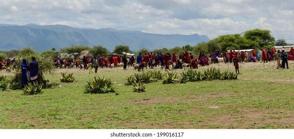 ARUSHA, TANZANIA - 22 MARCH: maasai tribe buying cows on livestock market on march 22, 2013 in Arusha, Tanzania.