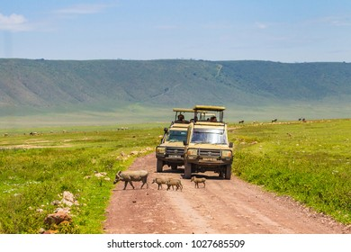 Arusha, Tanzania -January 23, 2018- Safari vehicles in the NgoroNgoro Conservation Area (NCA), a UNESCO World Heritage Site located in the Crater Highlands near Arusha, Tanzania, in East Africa.