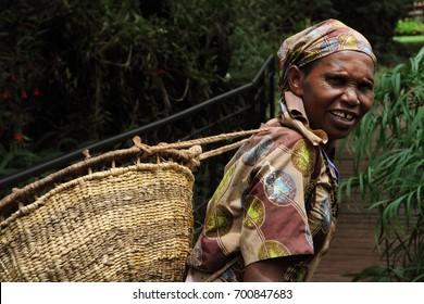 Arusha /Tanzania- March, 2016 : old Tanzanian Woman works in coffee farm in Karatu north of Tanzania